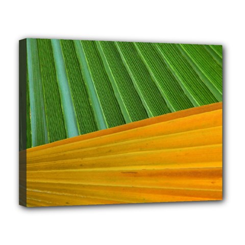 Pattern Colorful Palm Leaves Canvas 14  X 11