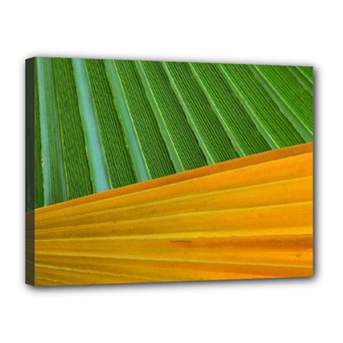 Pattern Colorful Palm Leaves Canvas 16  X 12