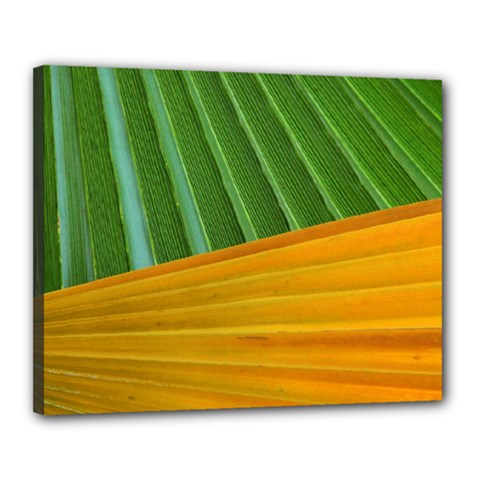 Pattern Colorful Palm Leaves Canvas 20  X 16