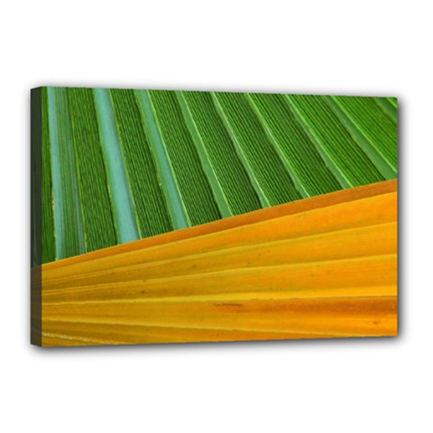 Pattern Colorful Palm Leaves Canvas 18  X 12