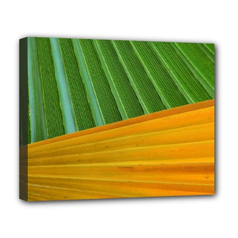 Pattern Colorful Palm Leaves Deluxe Canvas 20  X 16