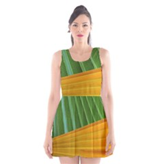 Pattern Colorful Palm Leaves Scoop Neck Skater Dress