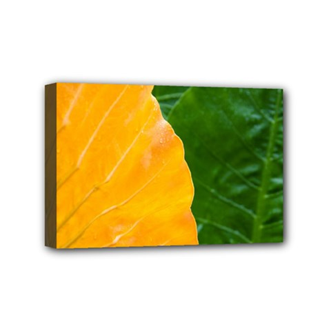 Wet Yellow And Green Leaves Abstract Pattern Mini Canvas 6  X 4