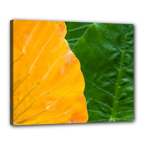 Wet Yellow And Green Leaves Abstract Pattern Canvas 20  X 16
