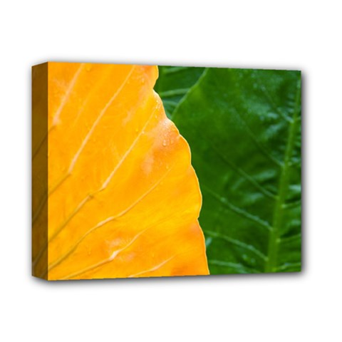 Wet Yellow And Green Leaves Abstract Pattern Deluxe Canvas 14  X 11