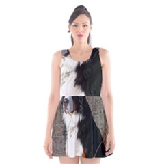 Bernese Mountain Dog Sitting Scoop Neck Skater Dress