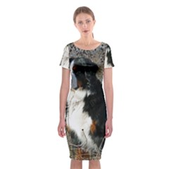 Bernese Mountain Dog Sitting Classic Short Sleeve Midi Dress