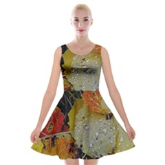 Autumn Rain Yellow Leaves Velvet Skater Dress