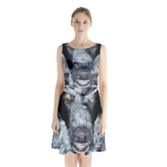 Border Collie 2 Sleeveless Chiffon Waist Tie Dress