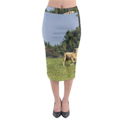 Border Collie Working Midi Pencil Skirt