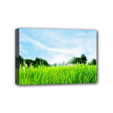 Green Landscape Green Grass Close Up Blue Sky And White Clouds Mini Canvas 6  X 4