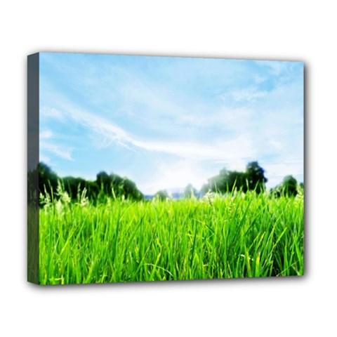Green Landscape Green Grass Close Up Blue Sky And White Clouds Deluxe Canvas 20  X 16