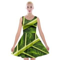 Leaf Dark Green Velvet Skater Dress