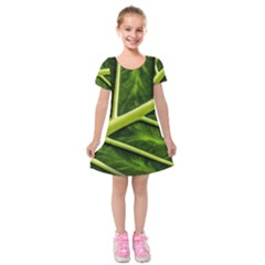 Leaf Dark Green Kids  Short Sleeve Velvet Dress