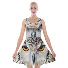 Owl Face Velvet Skater Dress