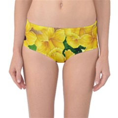 Springs First Arrivals Mid Waist Bikini Bottoms
