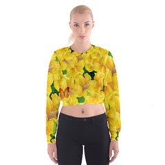 Springs First Arrivals Women s Cropped Sweatshirt