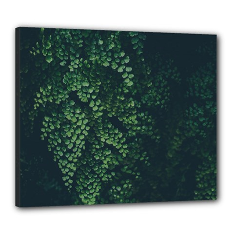 Abstract Art Background Biology Canvas 24  X 20
