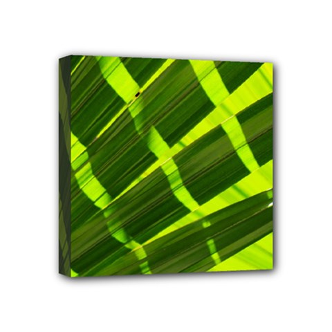 Frond Leaves Tropical Nature Plant Mini Canvas 4  X 4