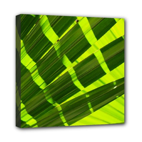 Frond Leaves Tropical Nature Plant Mini Canvas 8  X 8