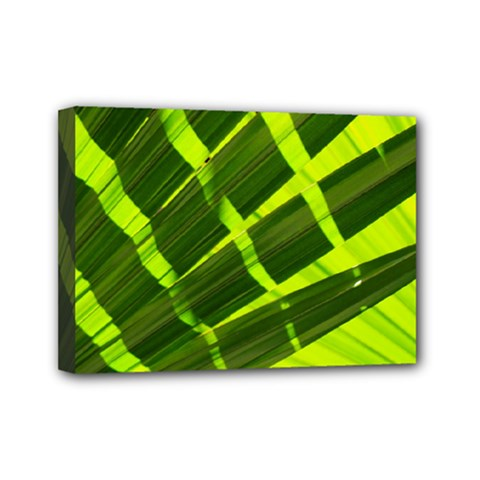 Frond Leaves Tropical Nature Plant Mini Canvas 7  X 5