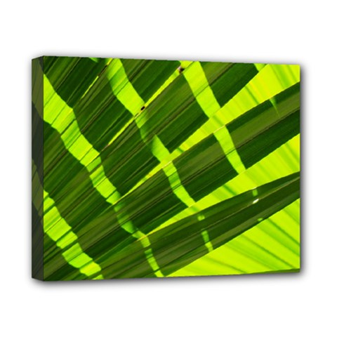 Frond Leaves Tropical Nature Plant Canvas 10  X 8