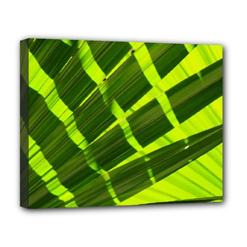 Frond Leaves Tropical Nature Plant Deluxe Canvas 20  X 16
