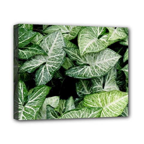 Green Leaves Nature Pattern Plant Canvas 10  X 8