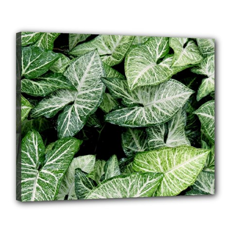 Green Leaves Nature Pattern Plant Canvas 20  X 16