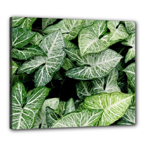 Green Leaves Nature Pattern Plant Canvas 24  X 20