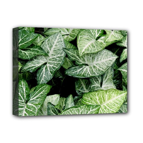 Green Leaves Nature Pattern Plant Deluxe Canvas 16  x 12