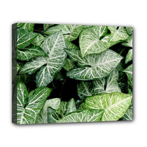 Green Leaves Nature Pattern Plant Deluxe Canvas 20  X 16