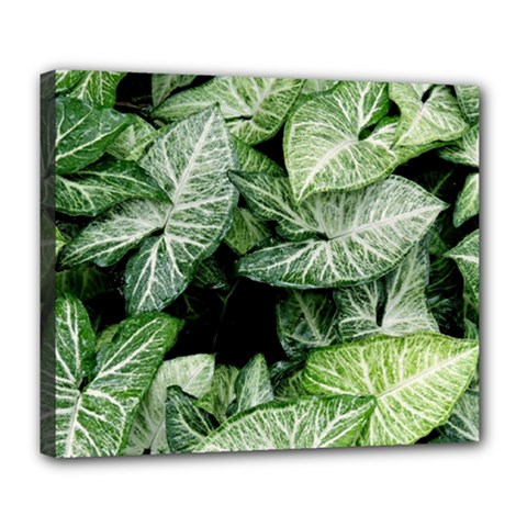 Green Leaves Nature Pattern Plant Deluxe Canvas 24  X 20