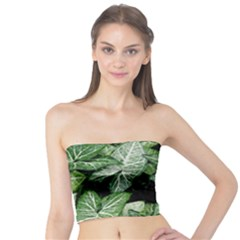 Green Leaves Nature Pattern Plant Tube Top