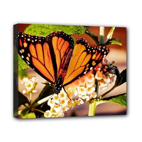 Monarch Butterfly Nature Orange Canvas 10  X 8