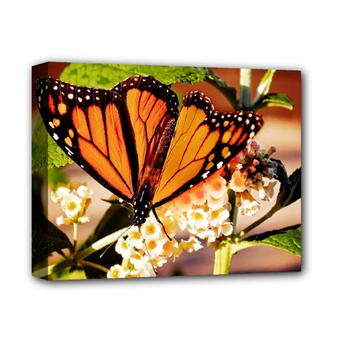 Monarch Butterfly Nature Orange Deluxe Canvas 14  X 11