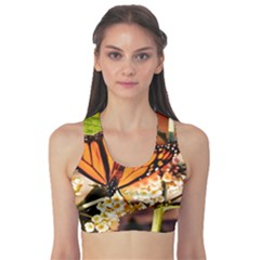 Monarch Butterfly Nature Orange Sports Bra