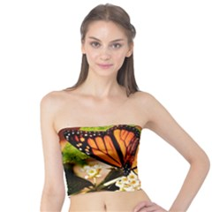 Monarch Butterfly Nature Orange Tube Top