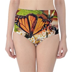 Monarch Butterfly Nature Orange High Waist Bikini Bottoms