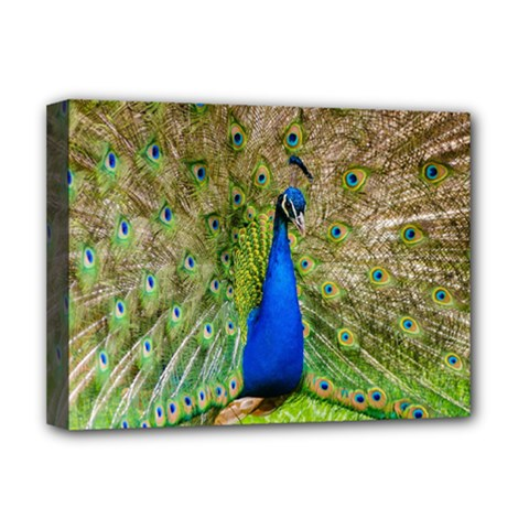 Peacock Animal Photography Beautiful Deluxe Canvas 16  X 12