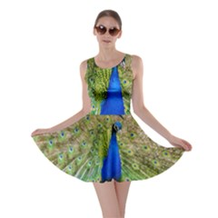 Peacock Animal Photography Beautiful Skater Dress