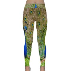 Peacock Animal Photography Beautiful Classic Yoga Leggings
