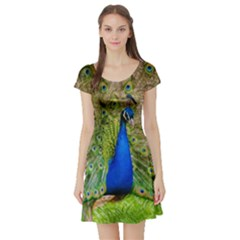 Peacock Animal Photography Beautiful Short Sleeve Skater Dress