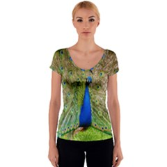 Peacock Animal Photography Beautiful Women s V-Neck Cap Sleeve Top