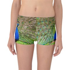 Peacock Animal Photography Beautiful Reversible Bikini Bottoms
