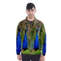 Peacock Animal Photography Beautiful Wind Breaker (men)