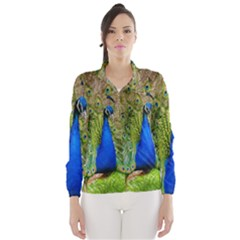Peacock Animal Photography Beautiful Wind Breaker (women)