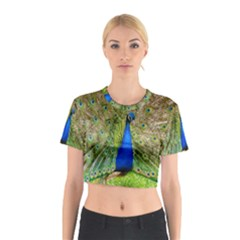Peacock Animal Photography Beautiful Cotton Crop Top