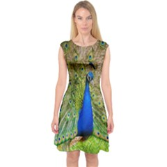 Peacock Animal Photography Beautiful Capsleeve Midi Dress