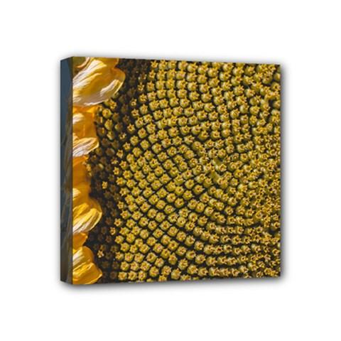 Sunflower Bright Close Up Color Disk Florets Mini Canvas 4  X 4